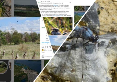 Screenshots of social media posts of the Quarry Life Award by HeidelbergCement
